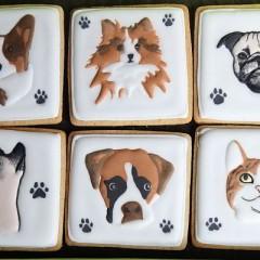 chiens et chats visages